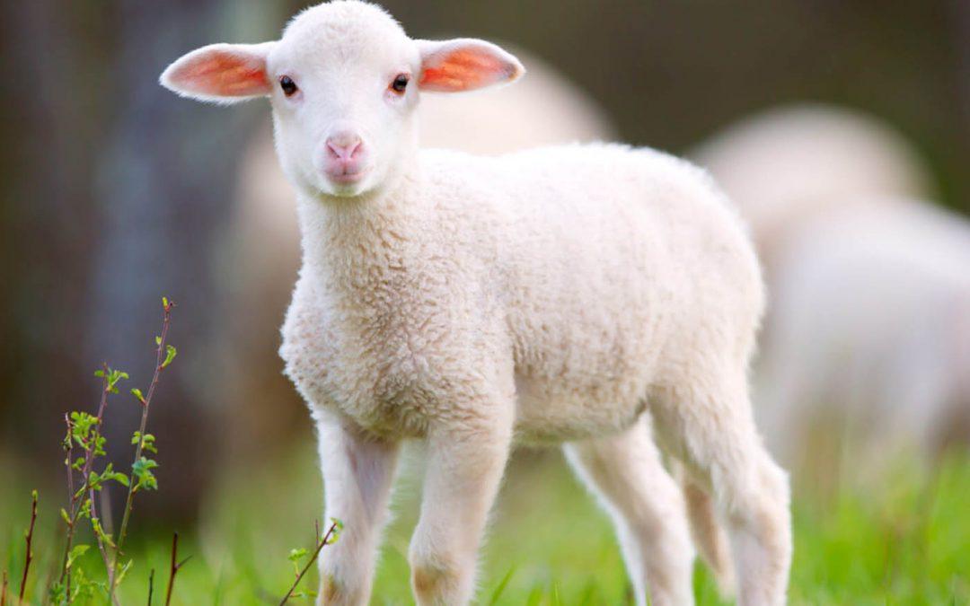 Onderhouden dat boerderij in de familie samen met een omgekeerde Ranch hypothecaire lening