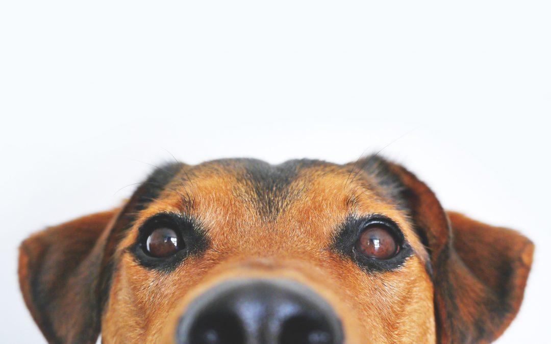 Hoe kies ik de juiste hondenbrokken?