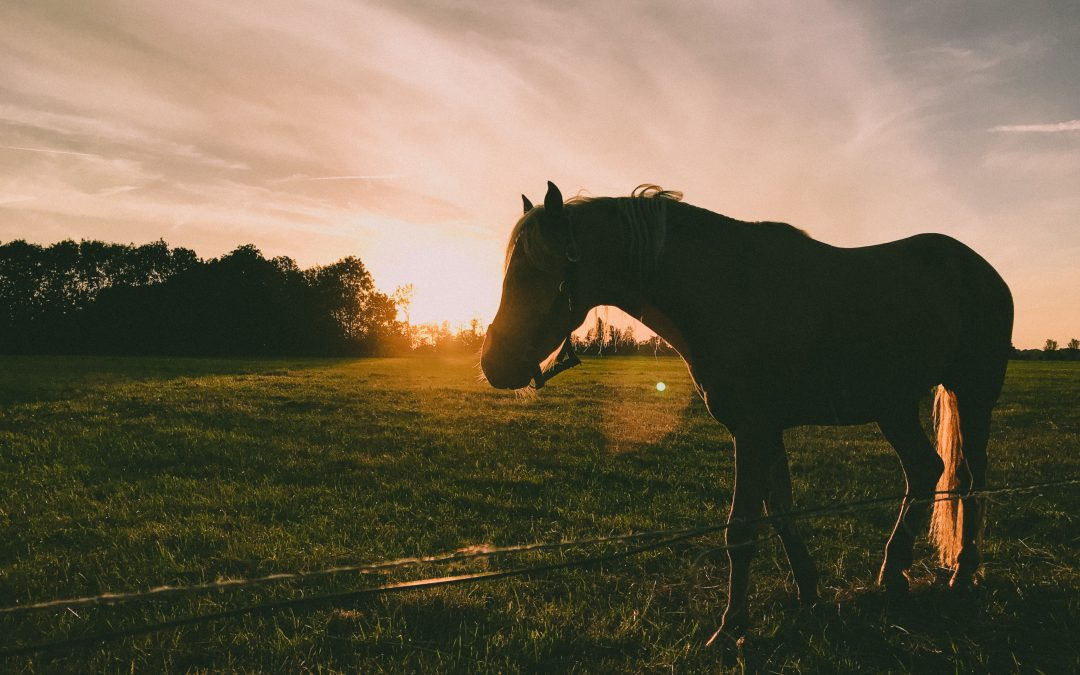 Wat lijnzaad allemaal kan doen voor je paard