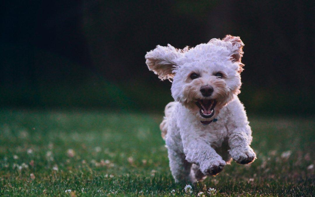 Het beste wandelschema voor je hond