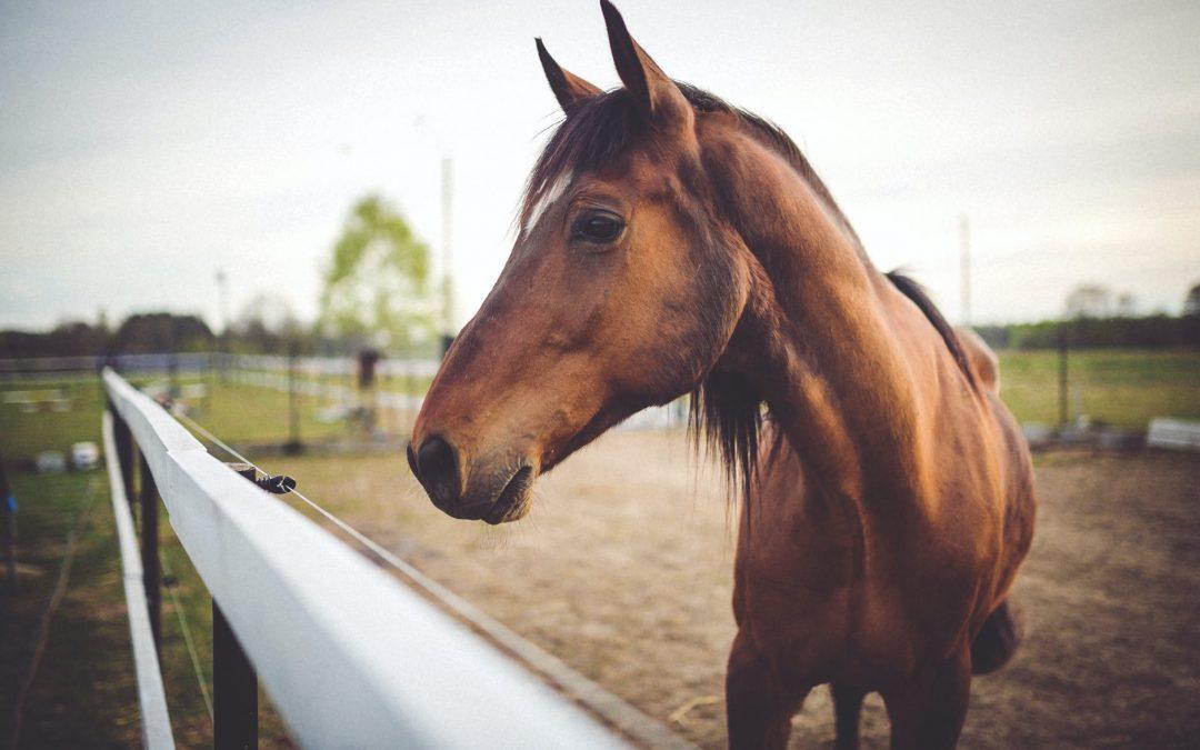 Glucosamine heeft een ontstekingsremmende functie voor je paard